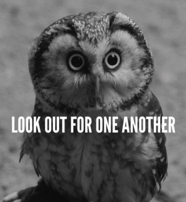 Get Inclusive owl